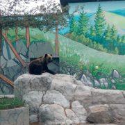 Ведмедям знайшли новий будинок із басейном