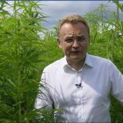 """""""Багато політиків вживають…"""": Садовий записав ролик на тлі плантації коноплі під музику реґі (відео)"""