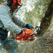 На Прикарпатті головний лісничий військового лісгоспу вирубав дерев на пів мільйона гривень