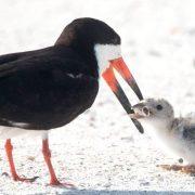 Мережу збурило фото, на якому птах годує недопалком пташеня