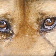 У Калуші труять собак. ВІДЕО