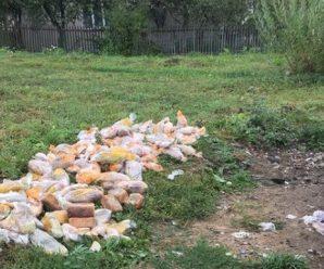 У Калуші на смітник викинули хліб