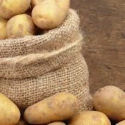 Експерт спрогнозував дефіцит картоплі в Україні