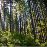 Зеленська сільська рада на Івано-Франківщині живе завдяки лісу