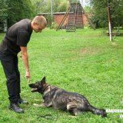 Як у Франківську живе і працює найкраща службова собака України(ВІДЕО)