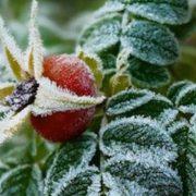 На Західну Україну насуваються заморозки