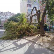 Сильний вітер у Франківську повалив дерева на декількох вулицях міста (фото)