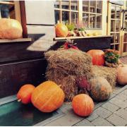 Гарбузи, відьми та павутиння: як Івано-Франківськ готується до Хелловіну (ФОТО)