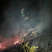На Прикарпатті горіло три гектари лісу — гасили 70 людей