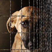 """Відтепер за знущання над тваринами можна """"сісти"""" на 8 років"""