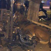 У центрі Львова коні знесли лавку на тротуарі: є потерпілі