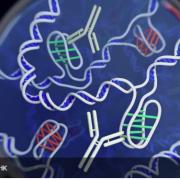 Новітній метод пояснив причини вроджених хвороб