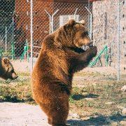 Прикарпатців закликають віддати хелловінські гарбузи для ведмедів