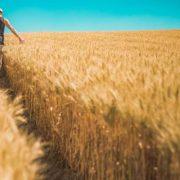 Фермери без права власності на землю будуть позбавлені паїв