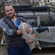 На Прикарпатті врятували лебедя, у якого на дзьобі застрягла пружина. ФОТО