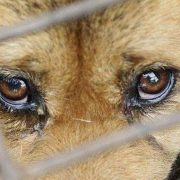 За вбивство собаки прикарпатець може сісти до в'язниці на три роки (ФОТО)