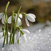 Весна настане вже в лютому: Синоптики шокували новим прогнозом