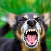На Тисмениччині у двох собак виявили сказ – оголошено карантин