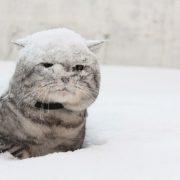 Мокрий сніг, сильний вітер та дощ! Прогноз погоди на 22 січня 2020 року