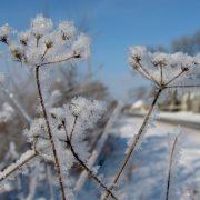 Без снігу, але з морозами: синоптики прогнозують аномальну зиму