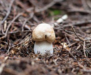 Прикарпатець серед зими знайшов білий гриб. ФОТОФАКТ