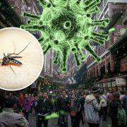 """""""Коронавірус від комарів?"""": вчені розповіли чи можуть комахи переносити інфекцію"""