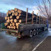 Попри карантин в Карпатах триває нещадна вирубка лісу (ВІДЕО)