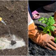 Натуральне добриво для усіх рослин, яке допоможе збільшити врожай