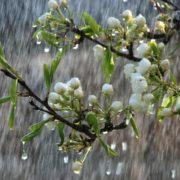 21 квітня: яке сьогодні свято та, що категорично заборонено робити у цей день