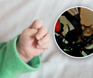 """""""Мати кричала та ридала"""": на Сумщині через кота дитина загинула страшною смертю"""
