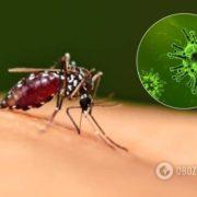 Чи переносять COVID-19 мухи та комарі: в МОЗ дали чітку відповідь