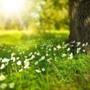 Справжнє літо: на Трійцю в Україні прогнозують до +28°