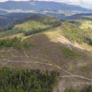Деякі екологи навмисно ігнорують вирубування лісів на Закарпатті, – Сазонов