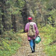 На Прикарпатті розшукують жінку, яка пішла в ліс ще 22 червня