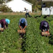 Польща потребує сотні тисяч сезонних працівників з України