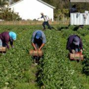 Україна хоче укласти угоду з Польщею щодо заробітчан (ДЕТАЛІ)