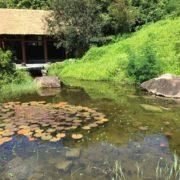 У Франківську створять парк, що поєднає культури Японії, Китаю та Кореї
