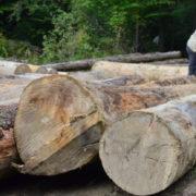 61 посадовця покарали за збитки довкіллю на Франківщині