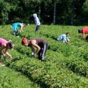 У Польщі спалах коронавірусу в господарстві: усі заражені – українці