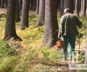 В лісі під Франківськом зник чоловік – нічні пошуки результату не дали