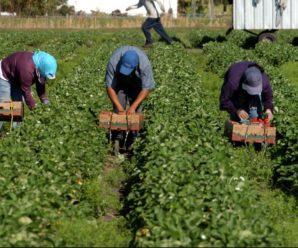 Бракує робочих рук: Європа далі кличе українців на роботу