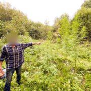 Поліція затримала прикарпатця, який у лісі вирощував елітні сорти коноплі