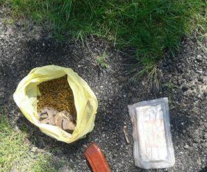 На Прикарпатті у двох братів знайшли плантацію коноплі та вибухові речовини