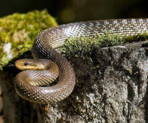 У центрі Івано-Франківська знайшли змію