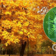 """Коронавірус стане """"важчим"""", а смертність зросте в рази: колишній санлікар дав прогноз на осінь"""
