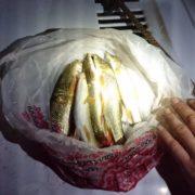 На Прикарпатті браконьєр виловлював червонокнижну рибу