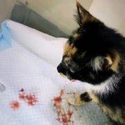 Кішка, яку викинули з четвертого поверху в Івано-Франківську вижила і має кошенят (ВІДЕО)