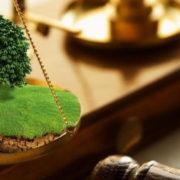 На Прикарпатті сільська рада незаконно передала землі вартістю майже п'ять мільйонів