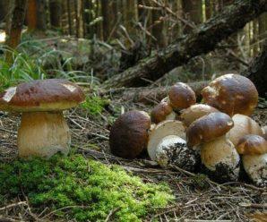 Мати кинула однорічну дитину заради грибів: деталі шокуючого інциденту
