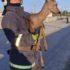 У Франківщині рятувальники витягнули козулю з ямии (фото)